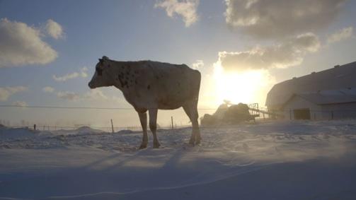 « Le plancher des vaches » le 8 mai prochain