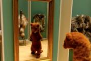 L'ONF accueille 6 animateurs émergents à Hothouse