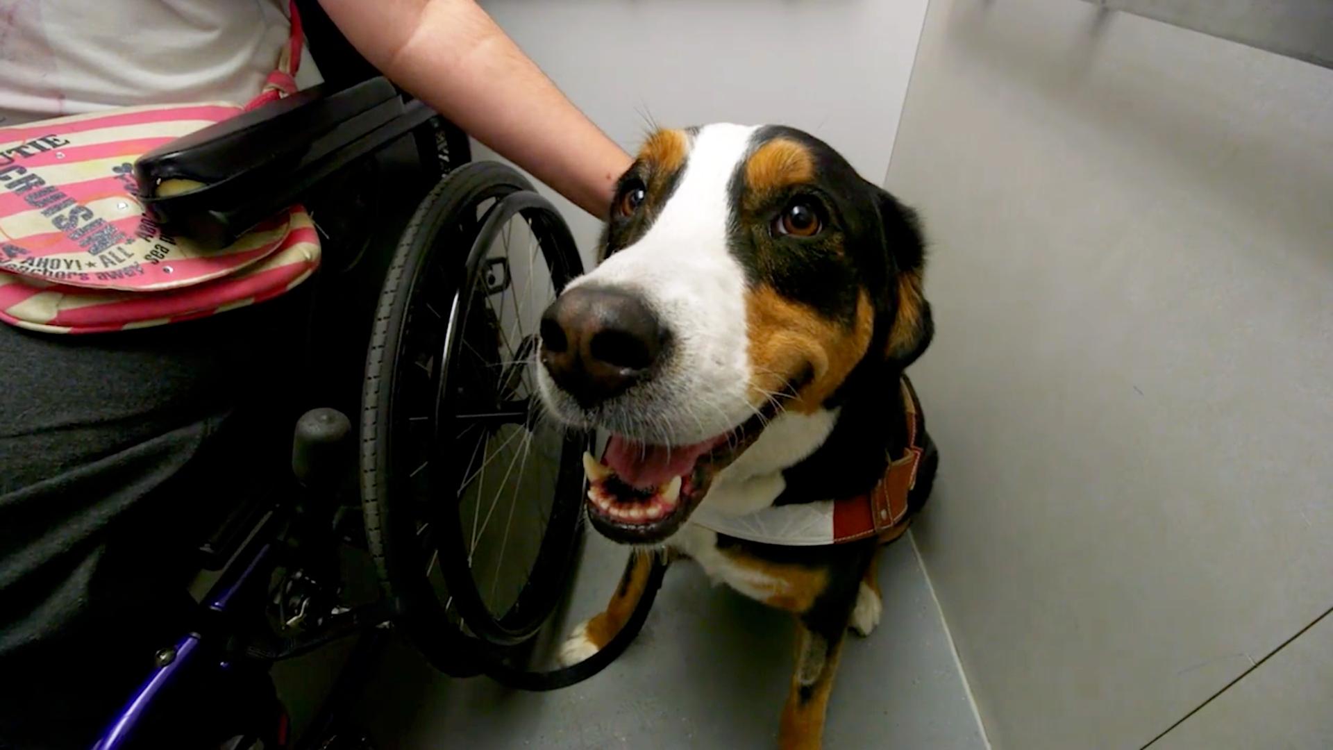 « Moi et mon chien »  : un documentaire sur les chiens Mira