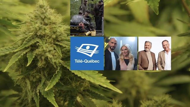 Cannabis : le marché noir n'a pas l'intention de laisser aller ses profits!