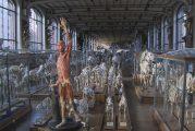Anish Kapoor, les impressionnistes, Victoire de Samothrace : rendez-vous avec l'art sur Planète+