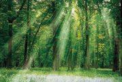 Environnement et biodiversité : renouer avec la nature en juin 2021 sur Planète+